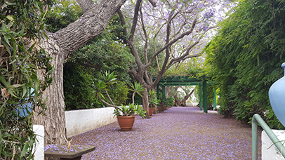Image of Jacaranda Walk at Rancho Los Alamitos